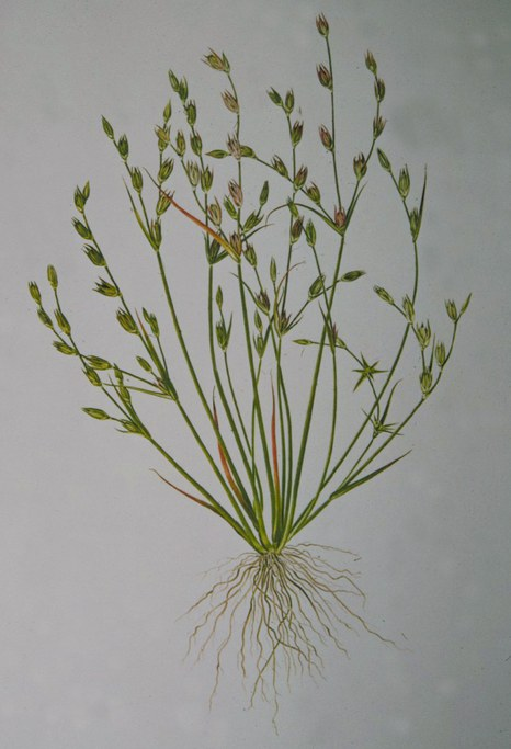 Toad Rush