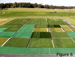 Infilled synthetic turf study