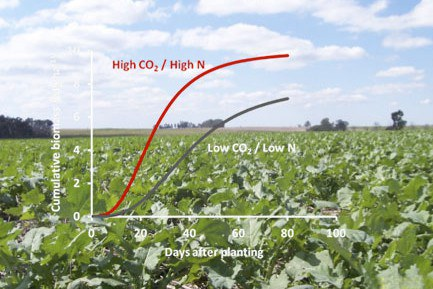 Cycles simulates the response of vegetation to nutrients and atmospheric forcings. The picure shows a canola canopy. Photo credit S. Mazzilli.