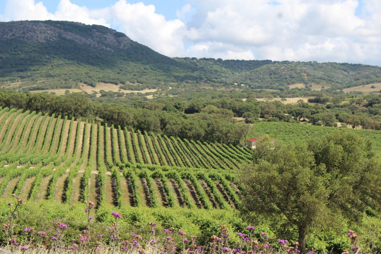 Mosaic landuse in NE Sardinia, Italy, showing vineyards, cork oak woodlands, and grasslands (photo credit K. Taylor).