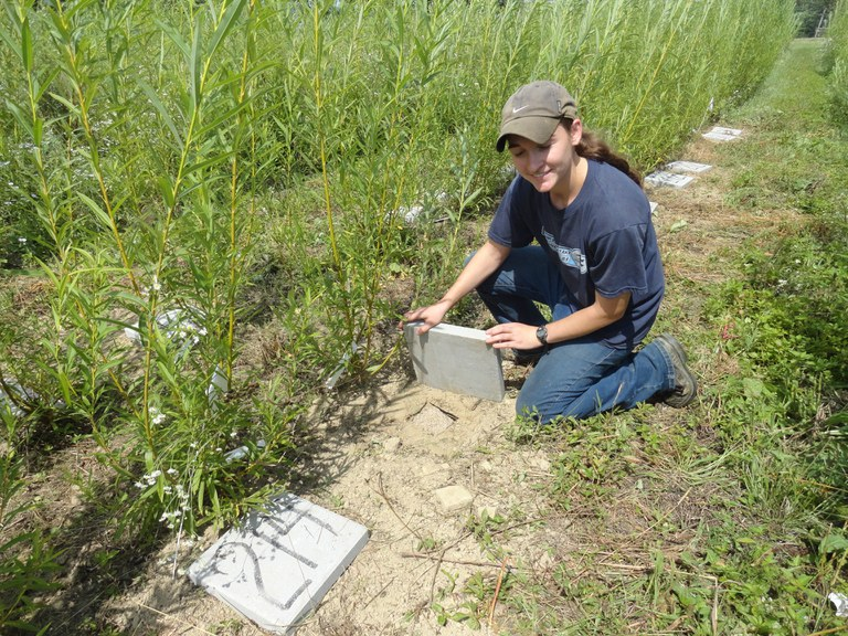 Kristie Dennison, who set up the experiment, next to the 15N labeled plants.