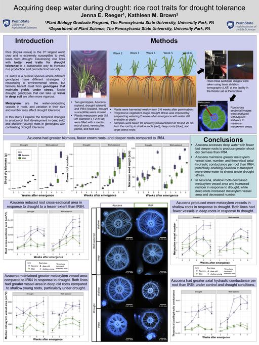 2019_Jenna_poster_Plant Vascular Biology_2019_final.png