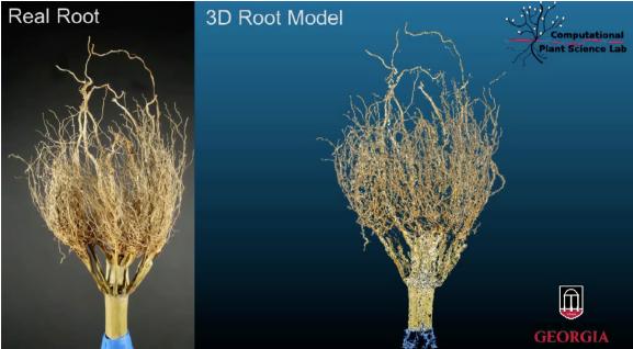 Dirt3D crowns comparison