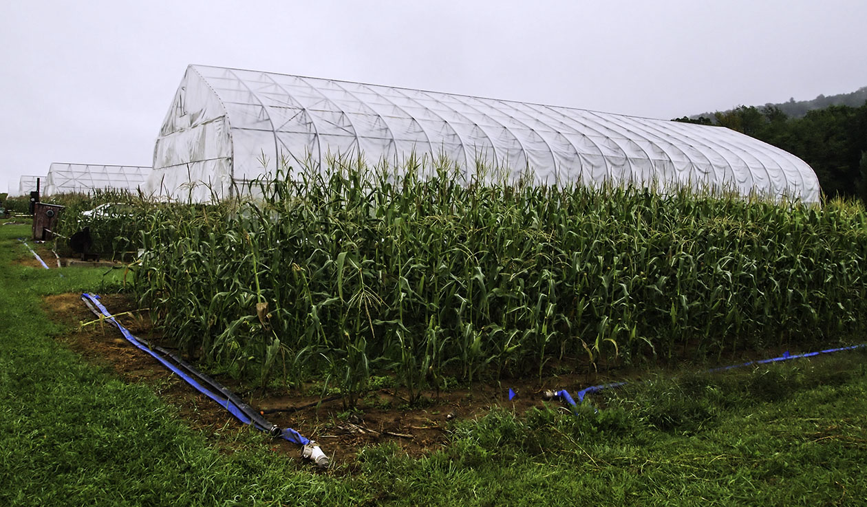Rainout shelter control plot with maize