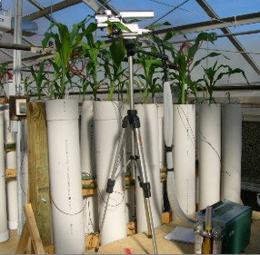 Several Mesocosms