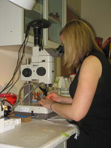 Viewing roots with compound microscope