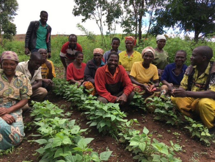 Farmers in Angonia, Mozambique with newly released bean varieties