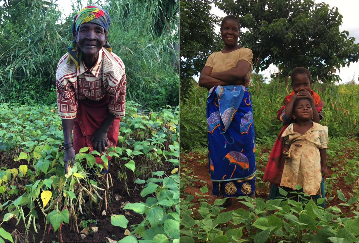 Angonia farmers with their on-farm field trials