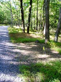 Forest Roadside