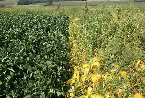 Soybean Delayed Planting