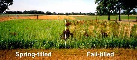 Spring and Fall Tilled