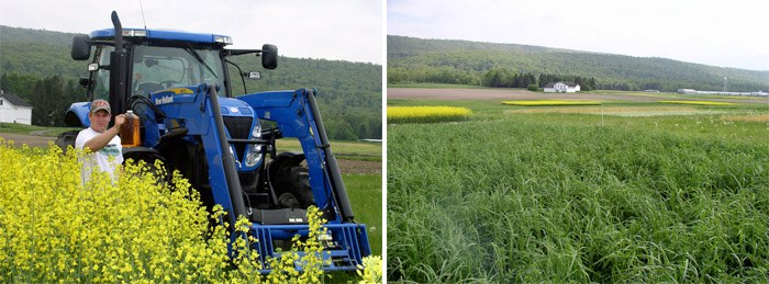 Research plots and canola-powered tractor
